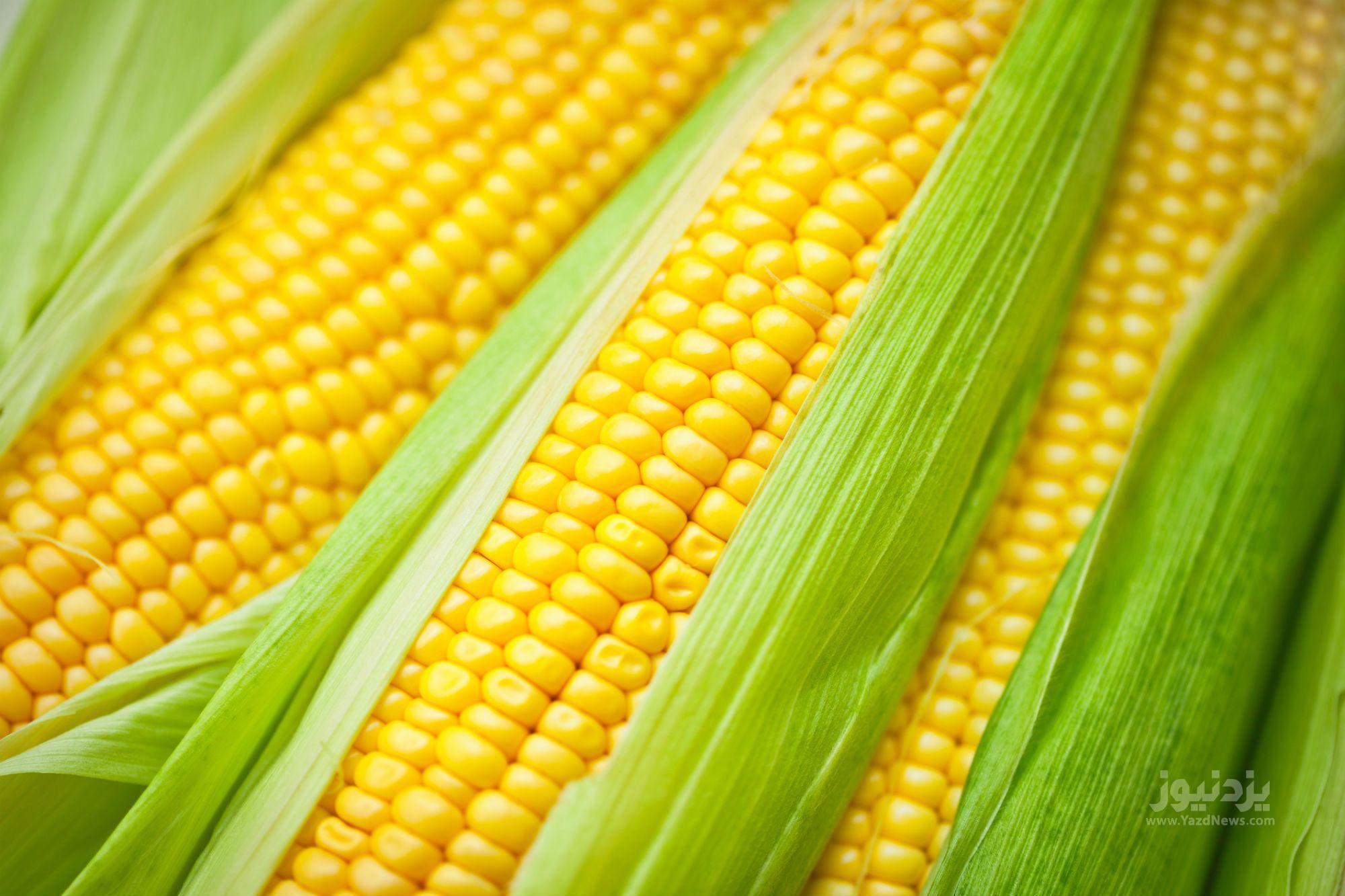 fresh_corn-583dfbd65f9b58d5b170c933