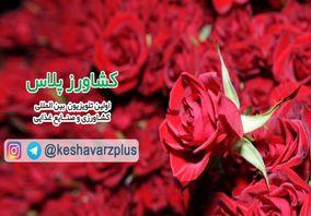 آموزش نگهداری گل رز در منزل از زبان غرفه داران نمایشگاه گل و گیاه تهران