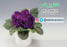 آموزش نگهداری گل بنفشه آفریقایی در منزل از زبان غرفه داران نمایشگاه گل و گیاه تهران